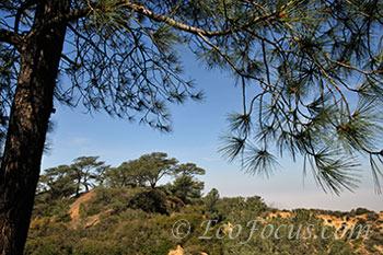 Torrey pines panorama