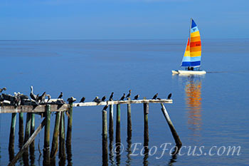 Cedar Key sailboat