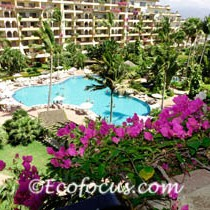 Bougainvillea in Vallartga resort